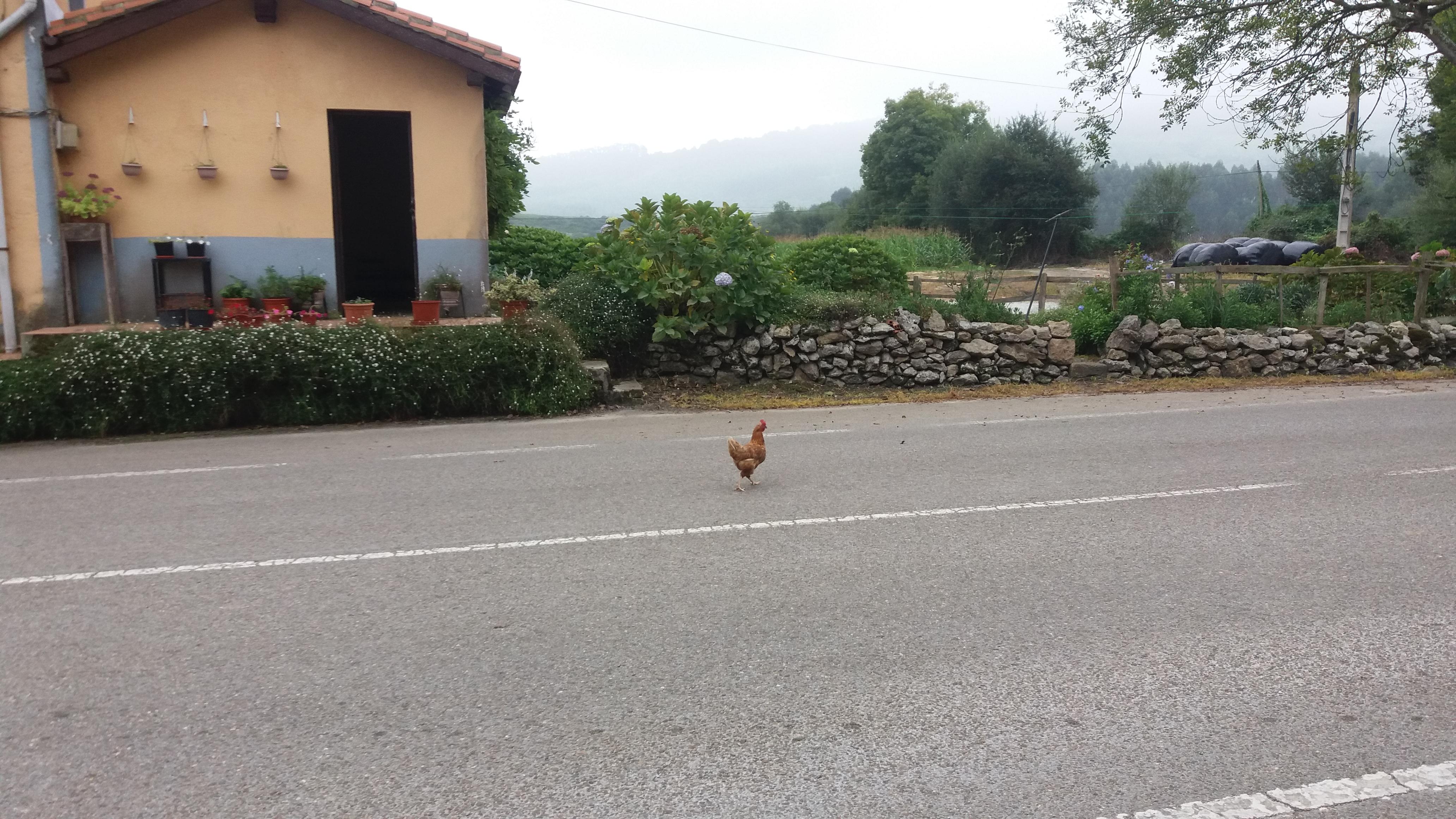 Das Huhn von Serdio