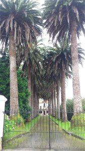 Palmen-Allee